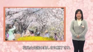 福島の観光地〜花見山公園〜