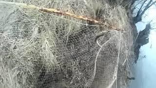 Ловля рыбы на кривду