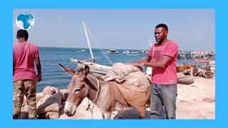 Donkey Welfare Day fails to take place in Lamu- VIDEO
