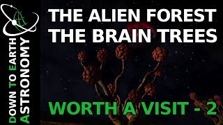 ALIEN FOREST / BRAIN TREES   WORTH A VISIT 2