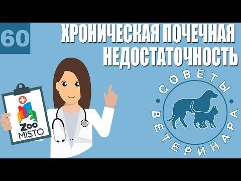 Хроническая Почечная Недостаточность | Лечение почечной недостаточности | Советы Ветеринара