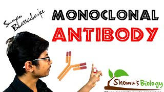 Monoclonal Antibody | Monoclonal Antibody Production Using Hybridoma Technology