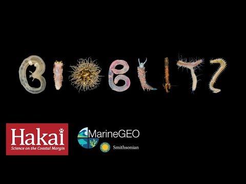 Hakai Bioblitz