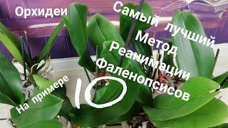 Орхидеи. Этот Метод Реанимации Фаленопсисов Реально РАБОТАЕТ. Победитель не получил свой выигрыш.