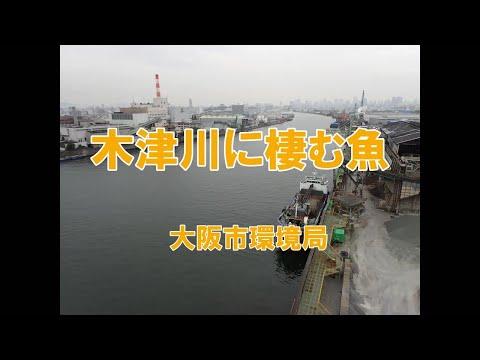 木津川に棲む魚【大阪市環境局】