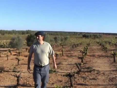 El hombre que quiso invertir en un terreno Rustico en Villalba del Alcor (Huelva)