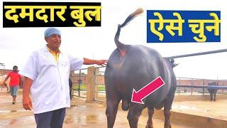cirb Hisar bull - 免费在线视频最佳电影电视节目- CNClips Net
