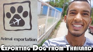 EXPORTING A DOG FROM THAILAND - LIVING IN THAILAND DAILY VLOG (ADITL EP300)