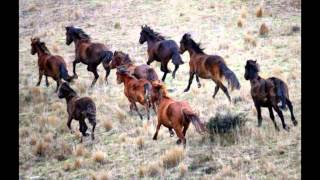 Wild Horses - Charlotte Martin Cover