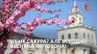 Весняна фотозона Хмельницького: на майдані Незалежності цвіте мигдаль (ФОТО)