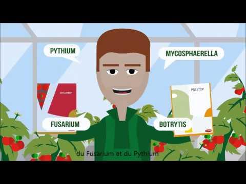 La préparation le microorganisme végétal traitant le candida