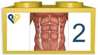 Лучшие упражнения для брюшного пресса (Уровень 2)