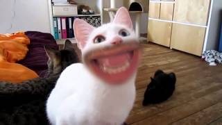 Markiplier meow Backwards.