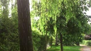 Yeşillik içinde