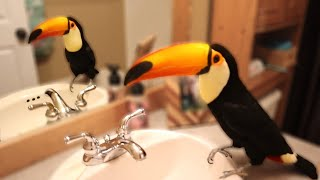 My Toucan Roams My House For The Whole Video!