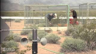 The Heat is On: Desert Tortoises and Survival (Full video)
