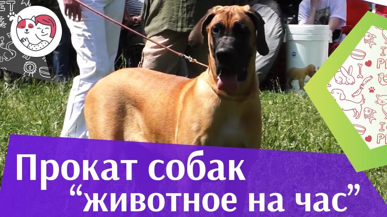 3 причины воспользоваться услугой «Собака на час» на ilikepet