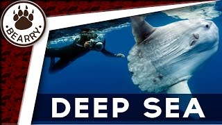 7 ปลาอสูรกายรูปร่างสยองแห่งทะเลลึก ที่มีอยู่จริง  | เรื่องแปลก