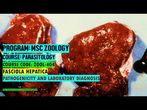 Papillómák a test gyógyszeres kezelésére