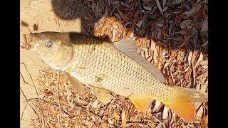 Рыбалка на ахтубе в ноябре