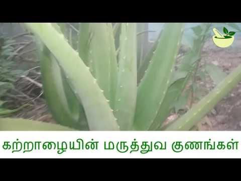 Video கற்றாழையின் மருத்துவ பயன்கள் Medicinal Uses of Aloe Vera