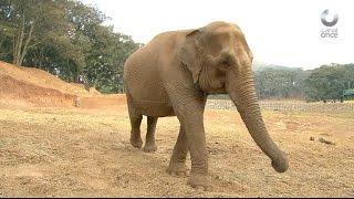 D Todo - Elefantes y tigres en reserva natural