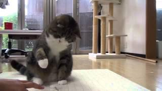 Кот не подпускает.