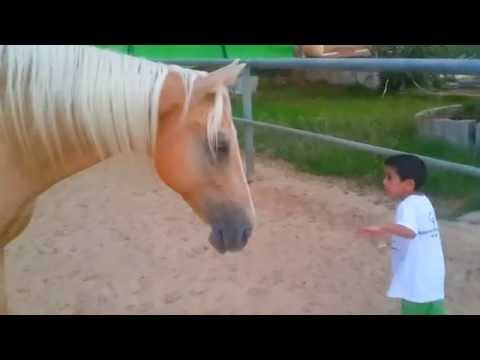 ??? ?????, ?? ??? ?????. boy with Williams syndrome creates nonverbal communication with a horse