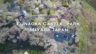 東北で桜の空撮をしてきました