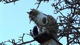 Экстримальный пушистый кот-скворец | # оффТОП