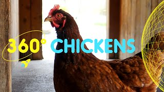 Meet the Chickens in Spitalfields City Farm | 360 Degrees for Kids