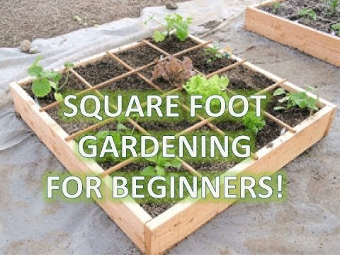 How to build a garden box: square foot gardening