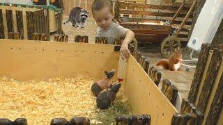 Контактный Зоопарк КРОШКА ЕНОТ Видео Для Детей Video for children Contact zoo