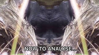 New Analysis of Bigfoot Footage Proves…