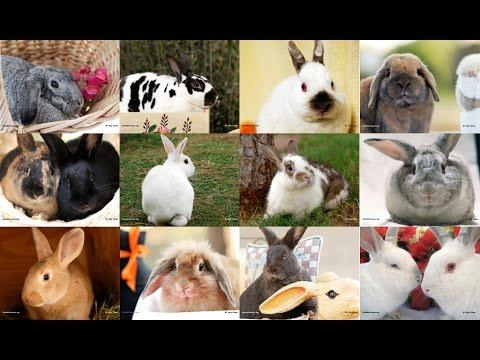 Video Cara Ternak Kelinci Budidiaya cepat besar dalam 40 hari dipanen