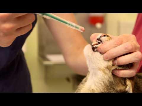 Veterinary Medicines in Indore, पशु चिकित्सा