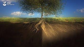 PHC Film: Il suolo è un organismo vivente