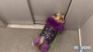 DOG 🐶 VLOG/Рутина Бетти/Прогулка/Красотка💋