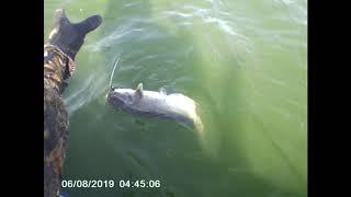 Ловля сома квоком на цимлянском водохранилище