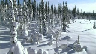 STEVE VAI - Christmas Time Is Here (custom Xmas card video)