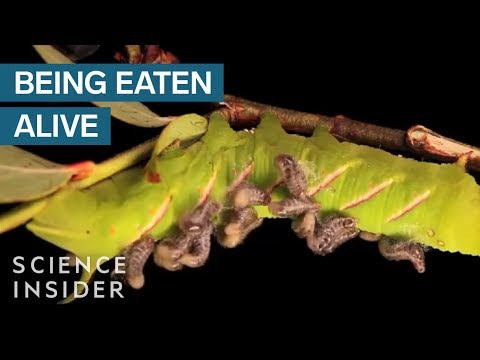 Carl Zimmer lihim na mundo ng mga parasito
