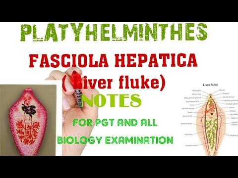 Papilloma vírus petefészekrák