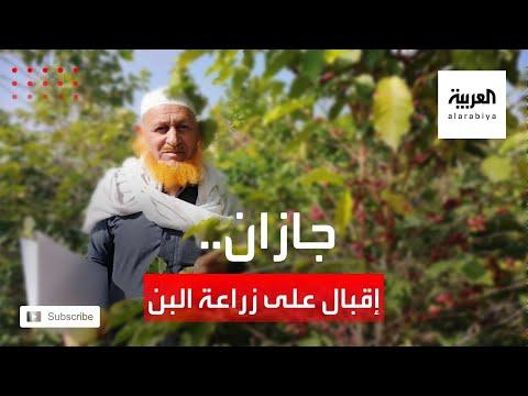 العرب اليوم - شاهد: إقبال متزايد على زراعة البن في منطقة جازان السعودية