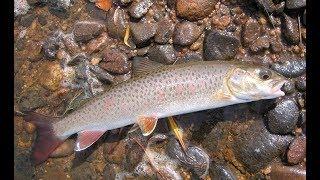 Рыбалка на кеме приморского края