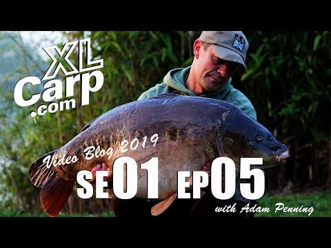 XL Carp Video