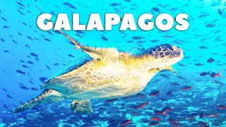 How to get to the Galapagos Islands in 2021 🐢