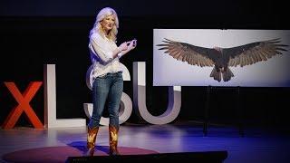 How vultures can help solve crimes | Lauren Pharr