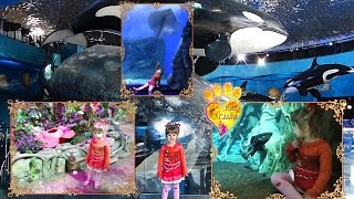 №1 Visiting Oceanarium ON THE RUSSIAN ISLAND, opened 6 September 2016 Гуляем по Океанариуму часть 2 - https://www.youtube.com/watch?v=0TJtHq9HzrE Гуляем по