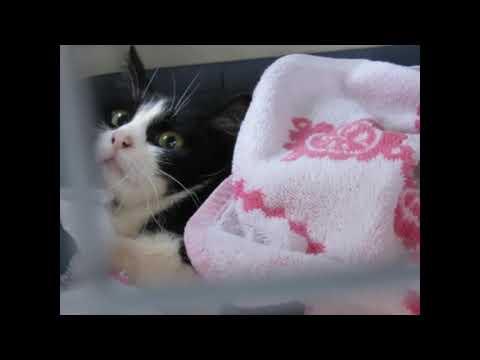 Кошка Бусинка хочет жить