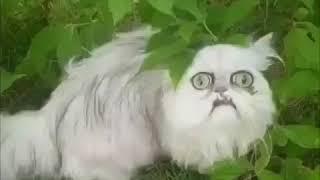 庭に変な顔の猫が!チャオチュール出動!/ Weird,looking cat
